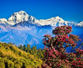 Himalayan Panorama at Royal Trek in Nepal